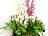 Cymbidium_y_Tulipanes_bis_Int